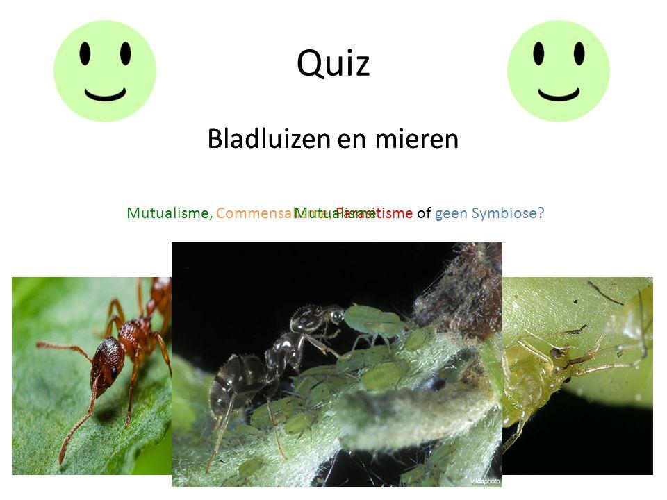 Quiz Bladluizen en mieren Mutualisme, Commensalisme, Parasitisme of geen Symbiose? Bladluizen en mieren Mutualisme
