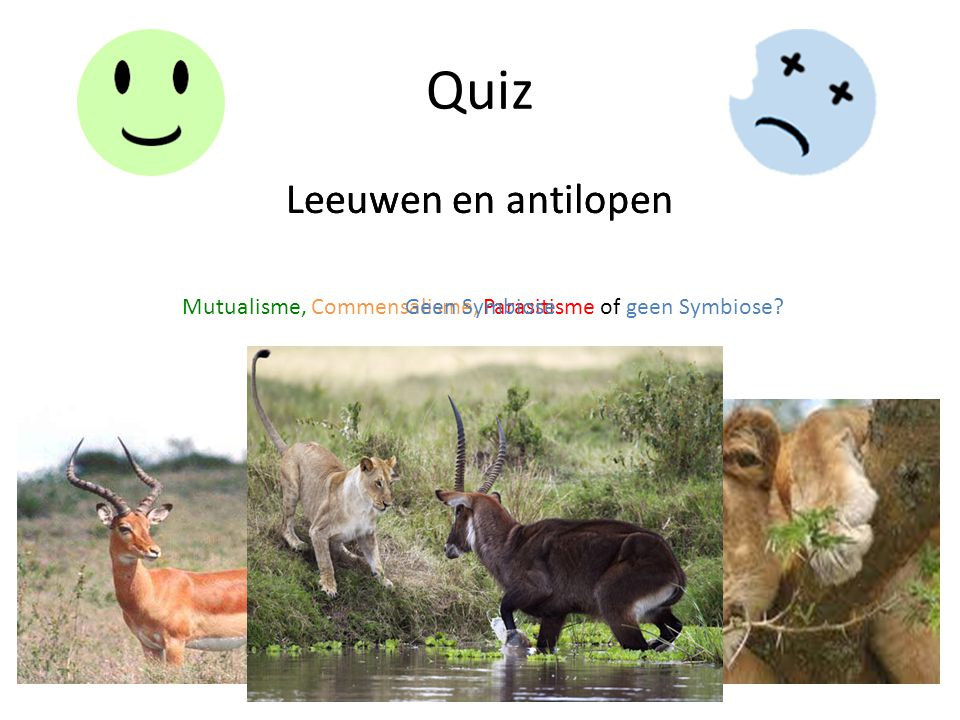 Quiz Leeuwen en antilopen Mutualisme, Commensalisme, Parasitisme of geen Symbiose? Leeuwen en antilopen Geen Symbiose