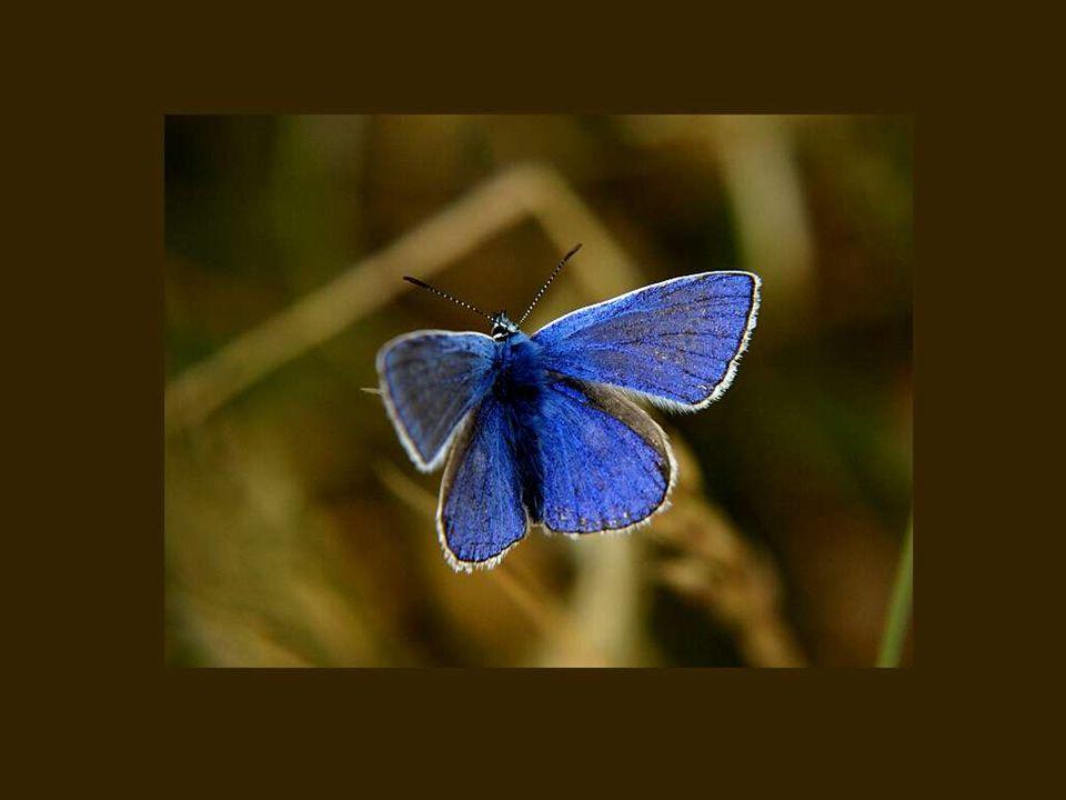 Quand on veut écrire sur les femmes, il faut tremper sa plume dans l arc-en-ciel et secouer sur sa ligne la poussière des ailes du papillon..
