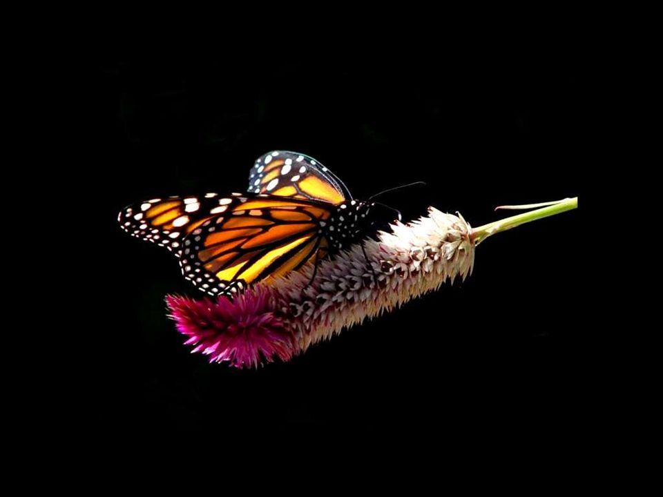 Je ne puis pas plus te montrer un papillon dans une chenille qu une fraise dans sa fleur : il faut que le soleil ait mûri l un et l autre.