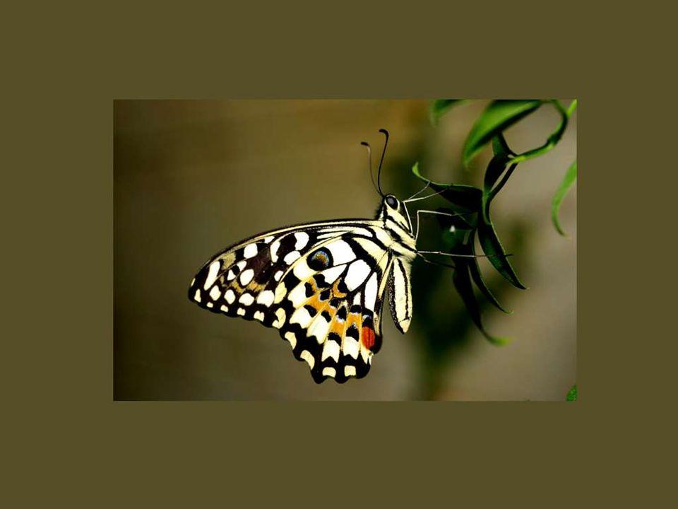 Vous ne toucherez point un papillon sans faire tomber la poudre qui colore ses ailes ; vous n analyserez point l amour sans en faire évanouir le charme.