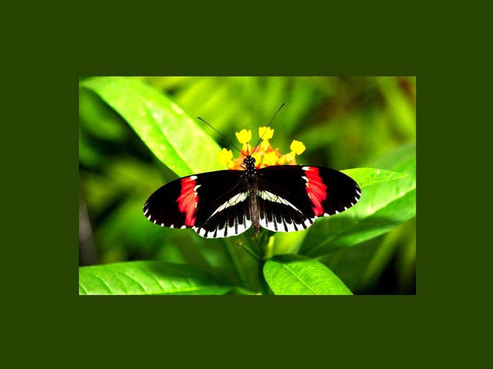 Ce que la chenille appelle la mort, le papillon l appelle renaissance.