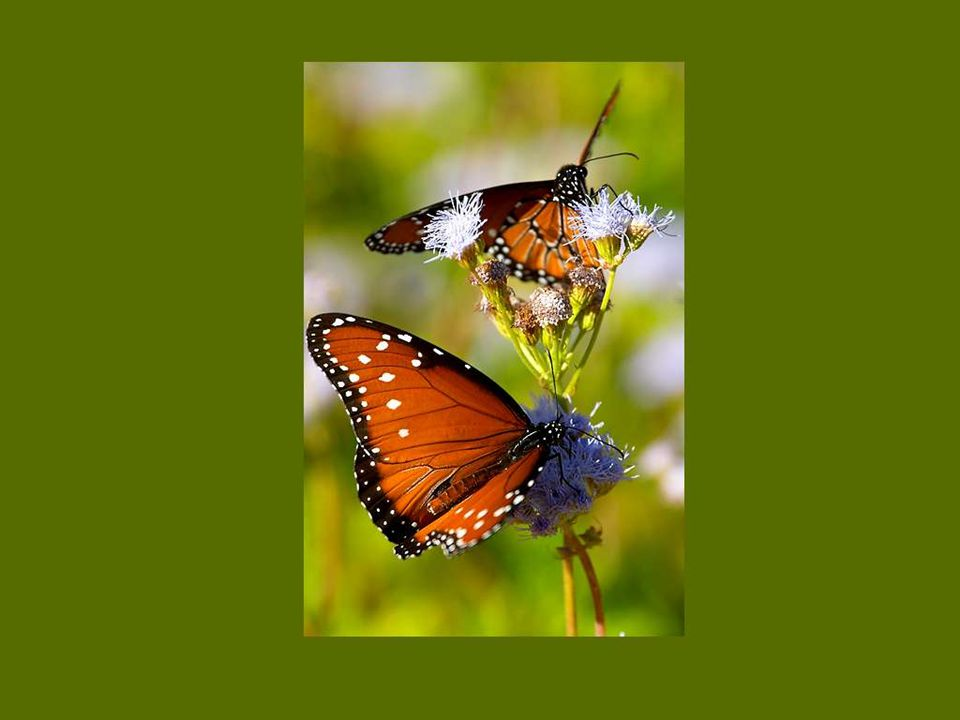L enfance est un papillon qui se hâte de brûler ses blanches ailes aux flammes de la jeunesse.