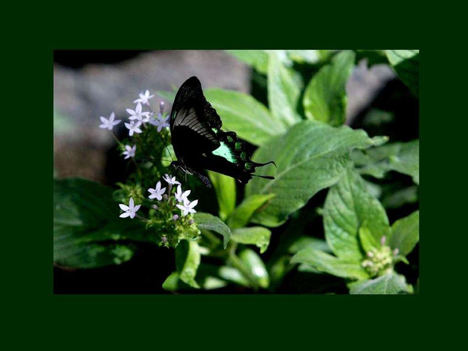 Le plus beau papillon n est qu une chenille en habit du dimanche.