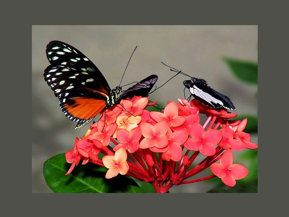 La vie est un papillon éphémère arborant les ailes du paradoxe.