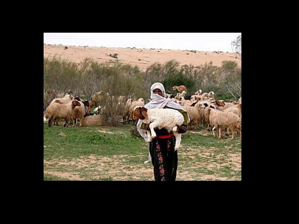 Jesaja 53: 7 Hij werd mishandeld, maar hij liet zich verdrukken en deed zijn mond niet open; als een lam dat ter slachting geleid wordt, en als een schaap dat stom is voor zijn scheerders, zo deed hij zijn mond niet open.