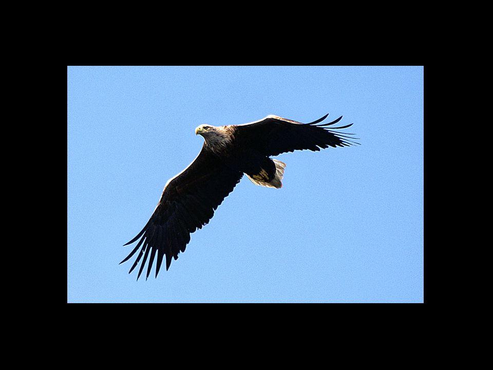 Jesaja 40:31 maar wie de HERE verwachten, putten nieuwe kracht; zij varen op met vleugelen als arenden; zij lopen, maar worden niet moede; zij wandelen, maar worden niet mat.