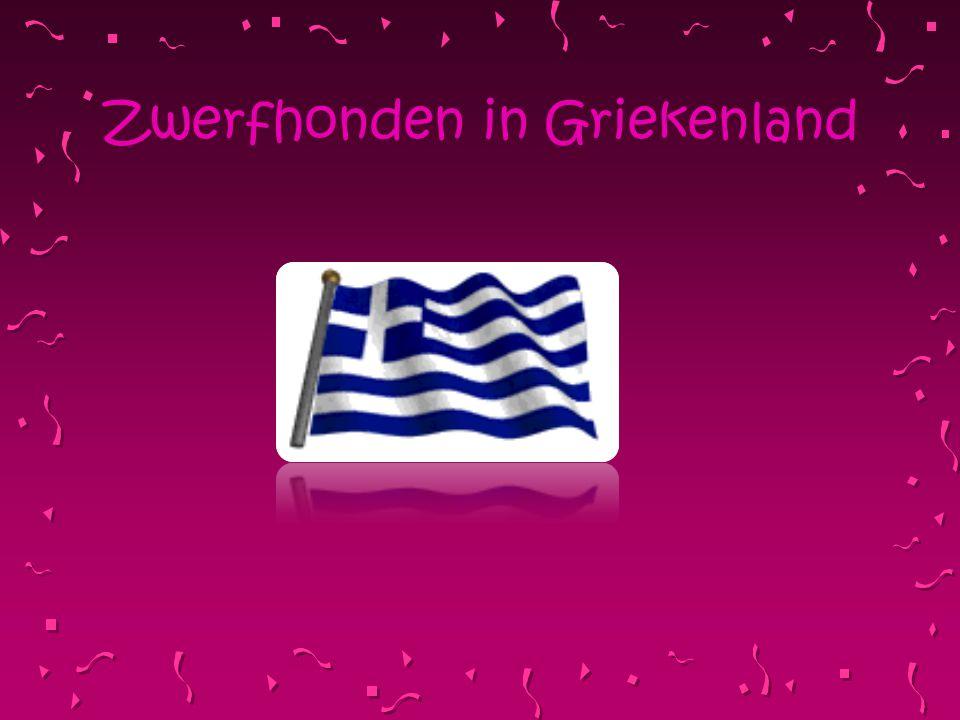 Zwerfhonden in Griekenland