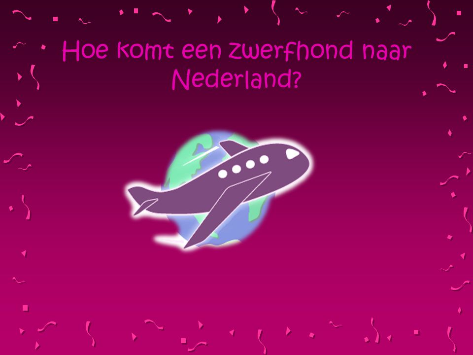 Hoe komt een zwerfhond naar Nederland?