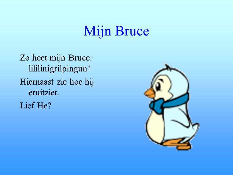 Mijn Bruce Zo heet mijn Bruce: lililinigrilpingun! Hiernaast zie hoe hij eruitziet. Lief He?