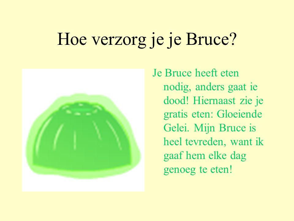 Hoe verzorg je je Bruce.Je Bruce heeft eten nodig, anders gaat ie dood.