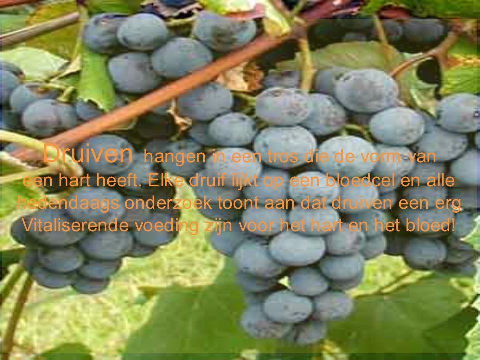 Druiven hangen in een tros die de vorm van een hart heeft. Elke druif lijkt op een bloedcel en alle hedendaags onderzoek toont aan dat druiven een erg