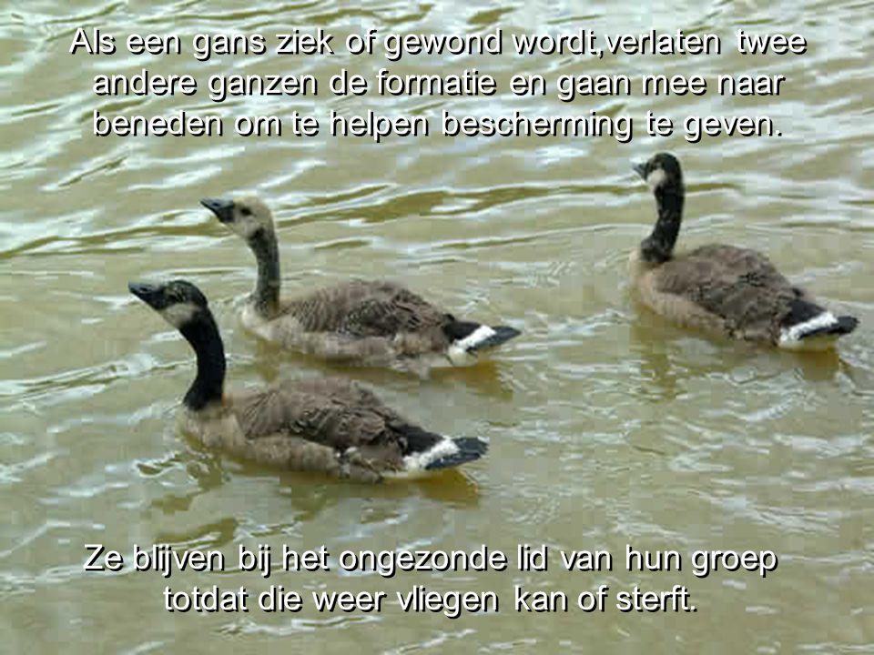 Ze blijven bij het ongezonde lid van hun groep totdat die weer vliegen kan of sterft.