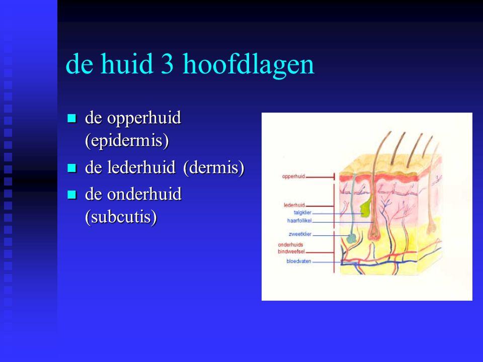 de huid 3 hoofdlagen de opperhuid (epidermis) de opperhuid (epidermis) de lederhuid (dermis) de lederhuid (dermis) de onderhuid (subcutis) de onderhui