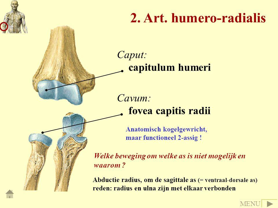 Caput: capitulum humeri Cavum: fovea capitis radii Anatomisch kogelgewricht, maar functioneel 2-assig ! 2. Art. humero-radialis Welke beweging om welk