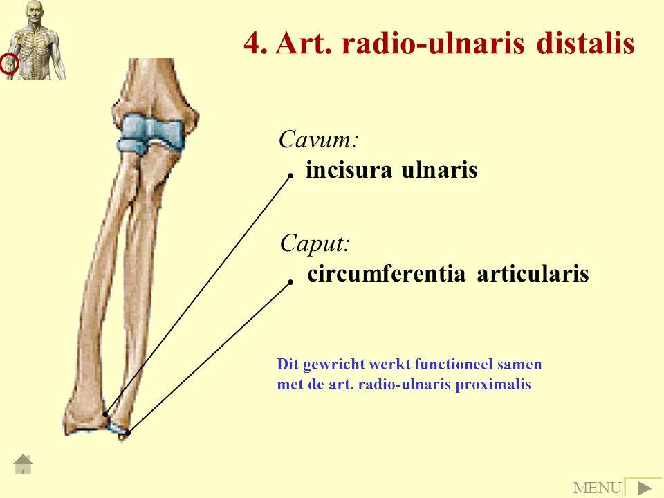 Caput: circumferentia articularis Cavum: incisura ulnaris Dit gewricht werkt functioneel samen met de art. radio-ulnaris proximalis 4. Art. radio-ulna