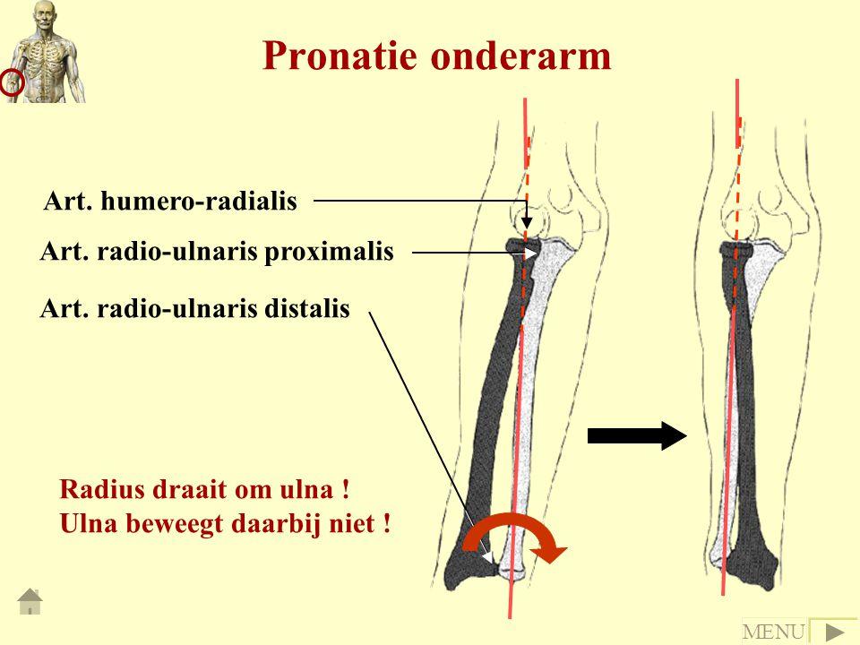 Pronatie onderarm Radius draait om ulna ! Ulna beweegt daarbij niet ! Art. radio-ulnaris proximalis Art. radio-ulnaris distalis Art. humero-radialis M