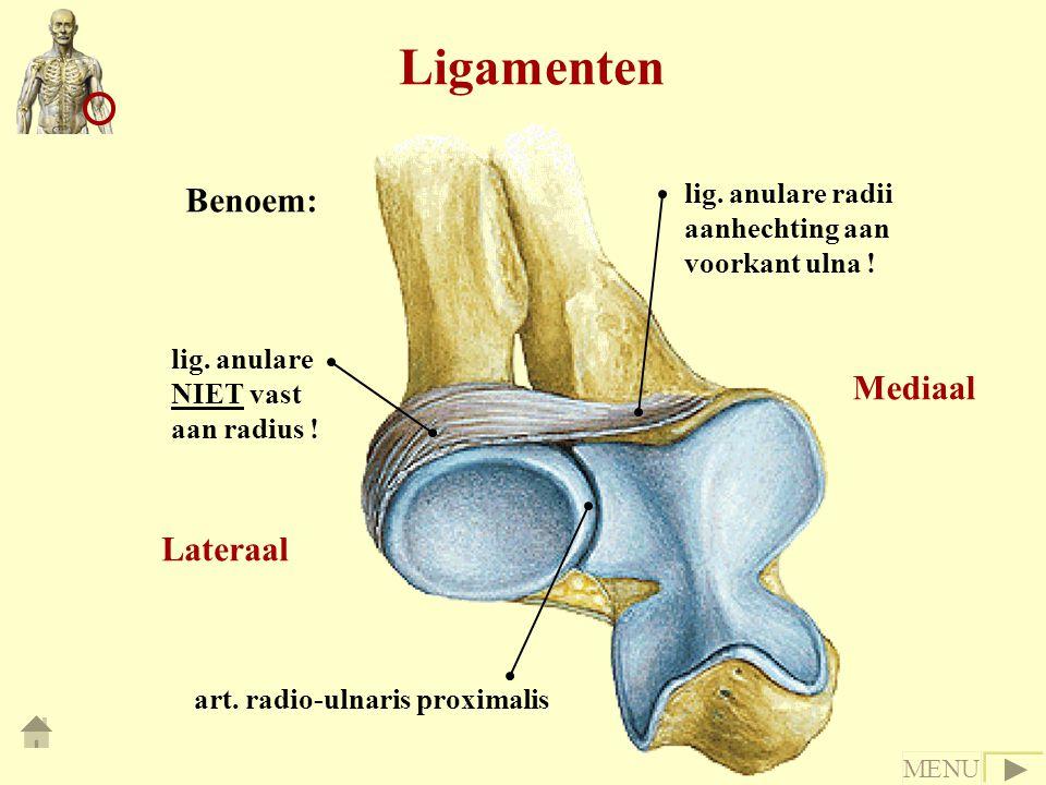 Ligamenten lig.anulare radii aanhechting aan voorkant ulna .