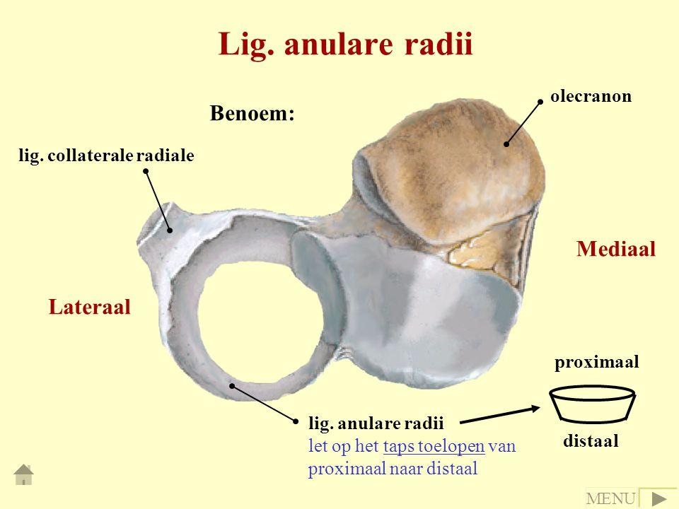 Lig. anulare radii olecranon lig. collaterale radiale lig. anulare radii let op het taps toelopen van proximaal naar distaal proximaal distaal Lateraa