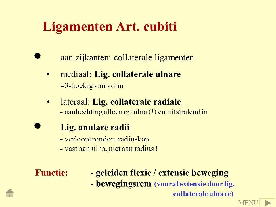 - - - aan zijkanten: collaterale ligamenten mediaal: Lig. collaterale ulnare - 3-hoekig van vorm lateraal: Lig. collaterale radiale - aanhechting alle
