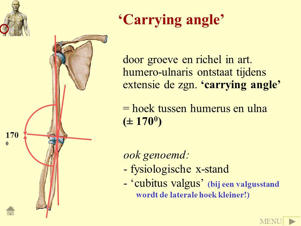 door groeve en richel in art. humero-ulnaris ontstaat tijdens extensie de zgn. 'carrying angle' = hoek tussen humerus en ulna (± 170 0 ) ook genoemd: