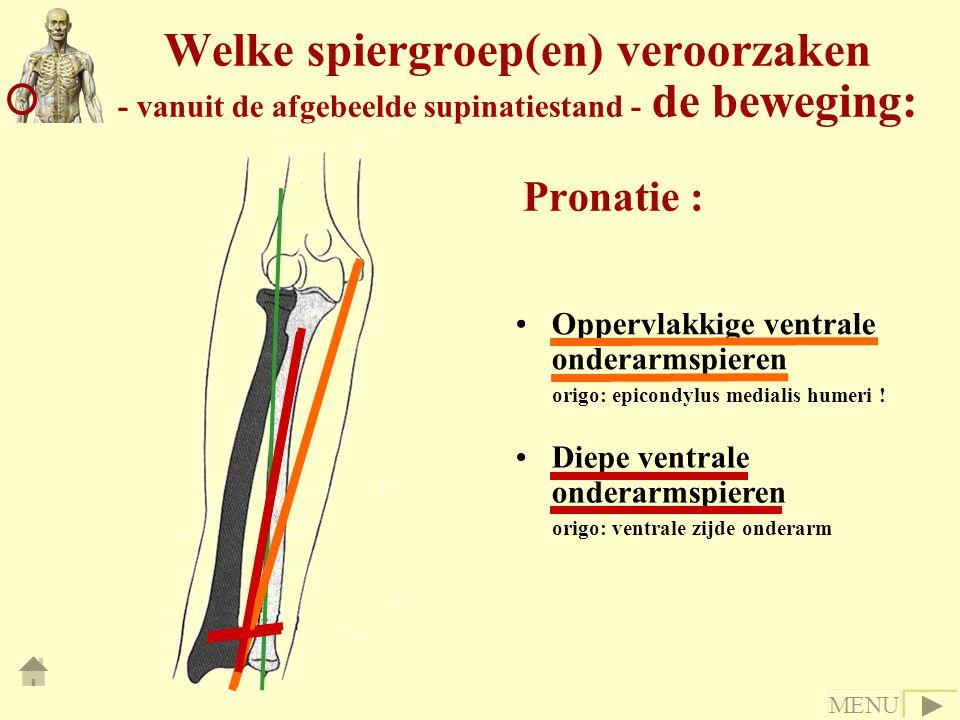 Welke spiergroep(en) veroorzaken - vanuit de afgebeelde supinatiestand - de beweging: Pronatie : Oppervlakkige ventrale onderarmspieren origo: epicondylus medialis humeri .