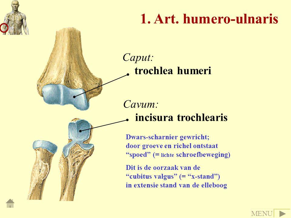 Caput: trochlea humeri Cavum: incisura trochlearis Dwars-scharnier gewricht; door groeve en richel ontstaat spoed (= lichte schroefbeweging) Dit is de oorzaak van de cubitus valgus (= x-stand ) in extensie stand van de elleboog 1.