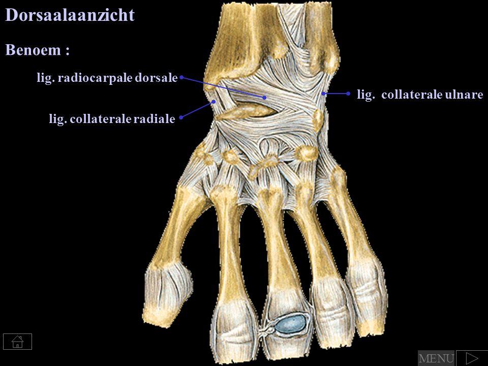 lig.. collaterale ulnare Dorsaalaanzicht lig. collaterale radiale lig. radiocarpale dorsale Benoem : MENU