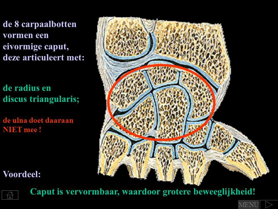 de 8 carpaalbotten vormen een eivormige caput, deze articuleert met: de radius en discus triangularis; de ulna doet daaraan NIET mee ! Voordeel: Caput