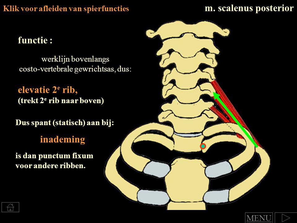 Klik voor afleiden van spierfuncties m. scalenus posterior functie : elevatie 2 e rib, (trekt 2 e rib naar boven) werklijn bovenlangs costo-vertebrale