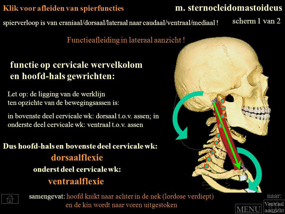 Klik voor afleiden van spierfuncties m. sternocleidomastoideus Dus hoofd-hals en bovenste deel cervicale wk: functie op cervicale wervelkolom en hoofd