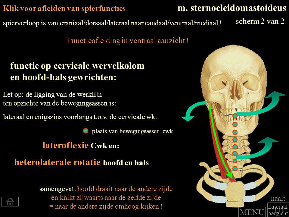 Klik voor afleiden van spierfuncties m. sternocleidomastoideus lateroflexie Cwk en: functie op cervicale wervelkolom en hoofd-hals gewrichten: spierve