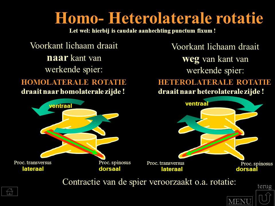 dorsaalflexie en functie: Klik voor benoemen spierfuncties (inter) spinale systeem GEEN rotatie .