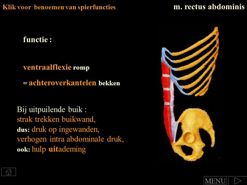 Klik voor benoemen van spierfuncties m. rectus abdominis functie : ventraalflexie romp = achteroverkantelen bekken Bij uitpuilende buik : strak trekke