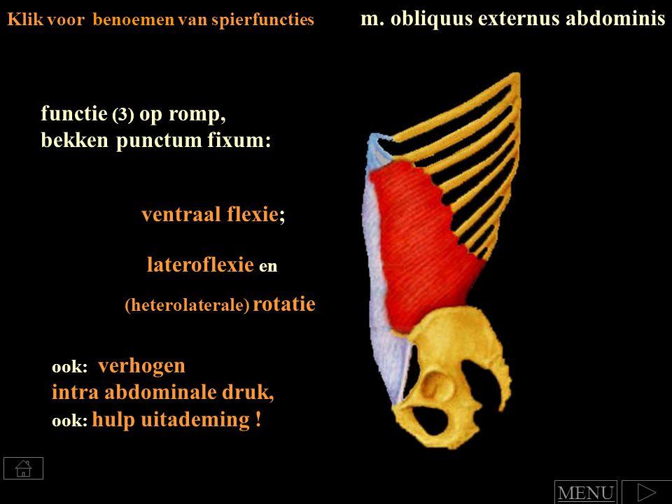 Klik voor benoemen van spierfuncties m. obliquus externus abdominis functie (3) op romp, bekken punctum fixum: (heterolaterale) rotatie ventraal flexi