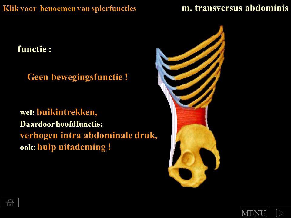 Klik voor benoemen van spierfuncties m. transversus abdominis functie : wel: buikintrekken, Daardoor hoofdfunctie: verhogen intra abdominale druk, ook