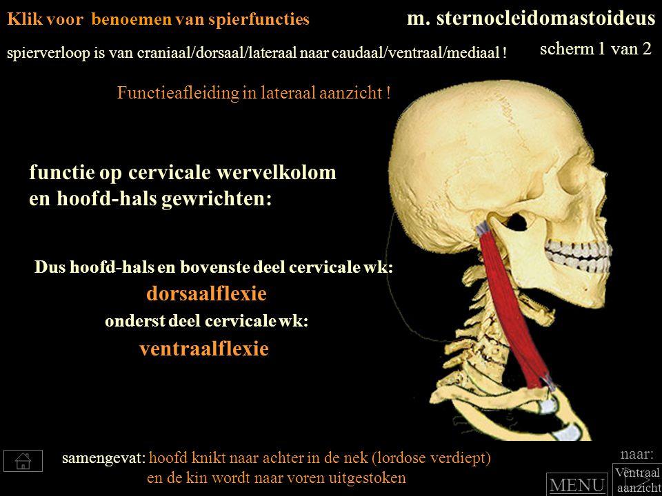 naar: Ventraal aanzicht Klik voor benoemen van spierfuncties m. sternocleidomastoideus Dus hoofd-hals en bovenste deel cervicale wk: functie op cervic