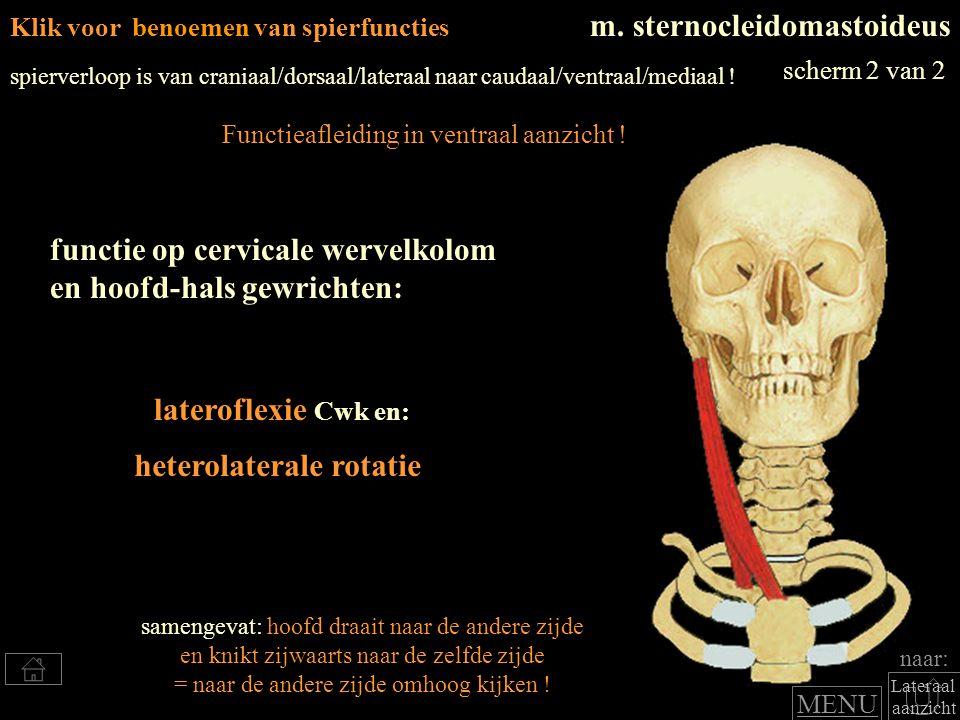 Lateraal aanzicht m. sternocleidomastoideus lateroflexie Cwk en: functie op cervicale wervelkolom en hoofd-hals gewrichten: spierverloop is van crania