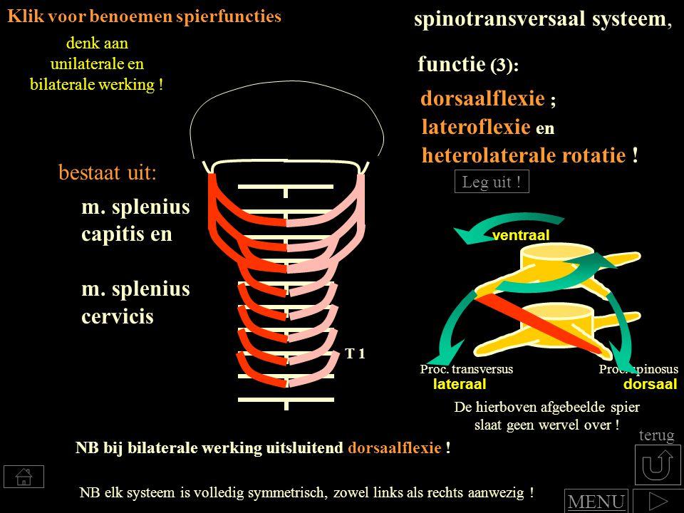 dorsaalflexie en nauwelijks tot geen lateroflexie functie : spinale systeem Bestaat uit kleine spiertjes tussen de wervels en langrere spierbundels die meerdere wervels overspannen Klik voor benoemen van spierfuncties naar afbeelding preparaat MENU