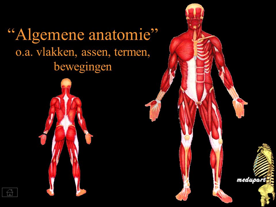 """Algemene anatomie"" o.a. vlakken, assen, termen, bewegingen"