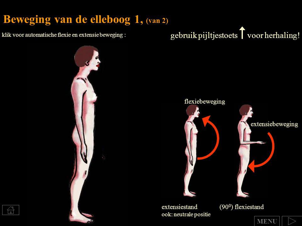 Beweging van de elleboog 1, (van 2) extensiestand ook: neutrale positie (90 0 ) flexiestand flexiebeweging extensiebeweging klik voor automatische fle