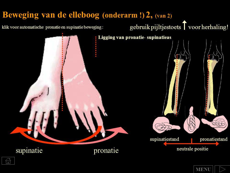 klik voor automatische pronatie en supinatie beweging : Beweging van de elleboog (onderarm !) 2, (van 2) gebruik pijltjestoets voor herhaling! neutral