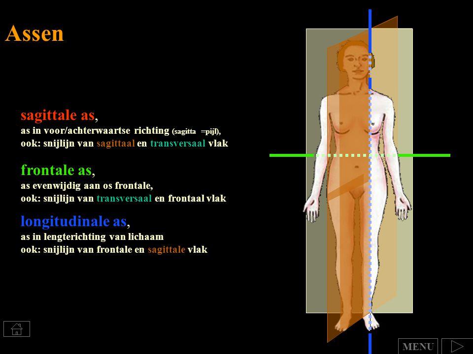 sagittale as, as in voor/achterwaartse richting (sagitta =pijl), ook: snijlijn van sagittaal en transversaal vlak frontale as, as evenwijdig aan os fr
