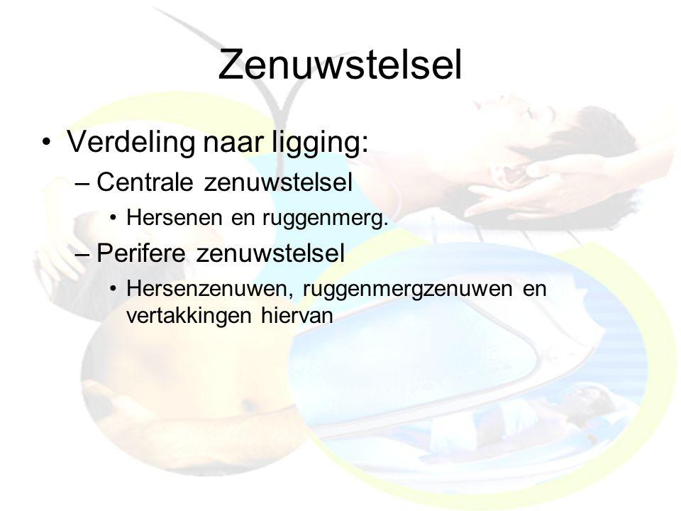 Zenuwstelsel Verdeling naar ligging: –Centrale zenuwstelsel Hersenen en ruggenmerg. –Perifere zenuwstelsel Hersenzenuwen, ruggenmergzenuwen en vertakk
