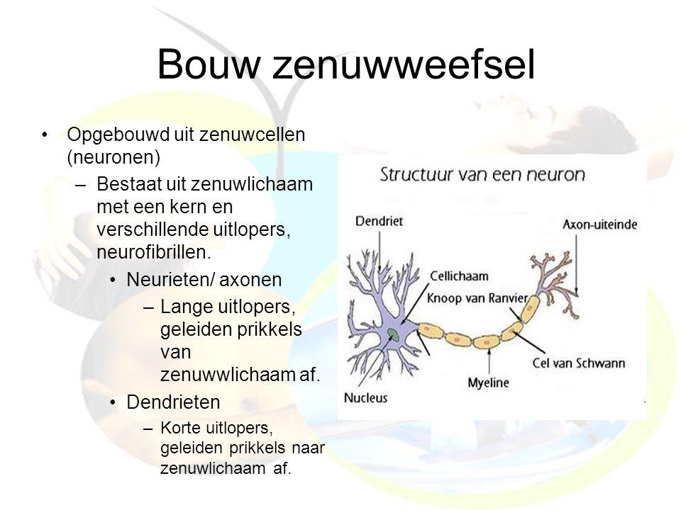 Bouw zenuwweefsel Opgebouwd uit zenuwcellen (neuronen) –Bestaat uit zenuwlichaam met een kern en verschillende uitlopers, neurofibrillen. Neurieten/ a