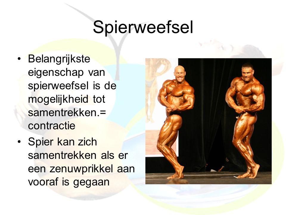 Spierweefsel Belangrijkste eigenschap van spierweefsel is de mogelijkheid tot samentrekken.= contractie Spier kan zich samentrekken als er een zenuwpr