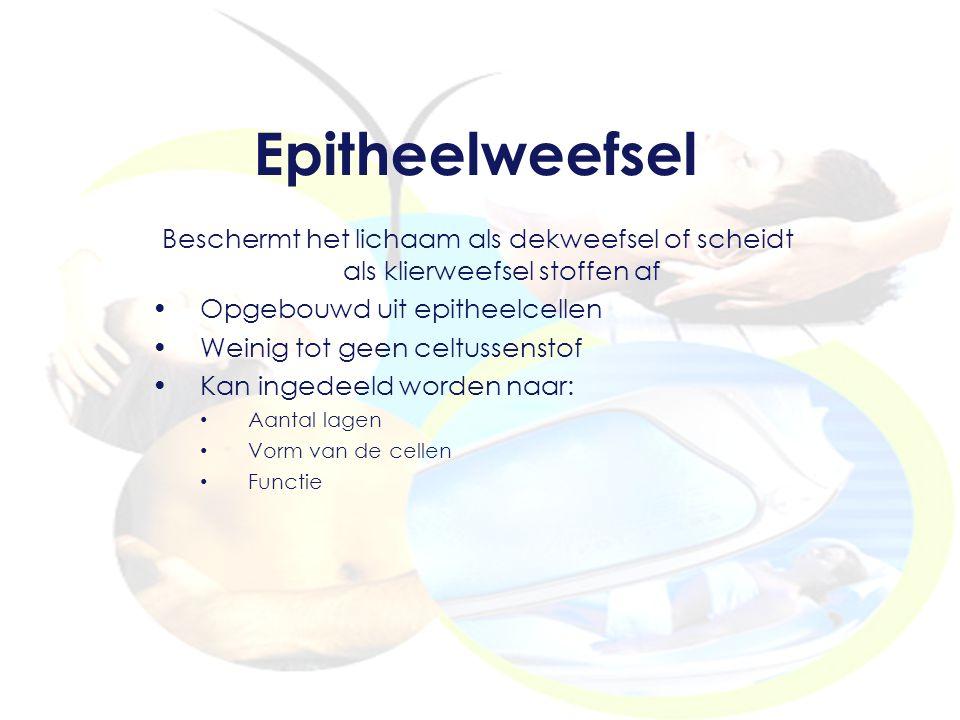 Epitheelweefsel Beschermt het lichaam als dekweefsel of scheidt als klierweefsel stoffen af Opgebouwd uit epitheelcellen Weinig tot geen celtussenstof