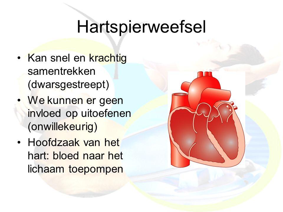 Hartspierweefsel Kan snel en krachtig samentrekken (dwarsgestreept) We kunnen er geen invloed op uitoefenen (onwillekeurig) Hoofdzaak van het hart: bl