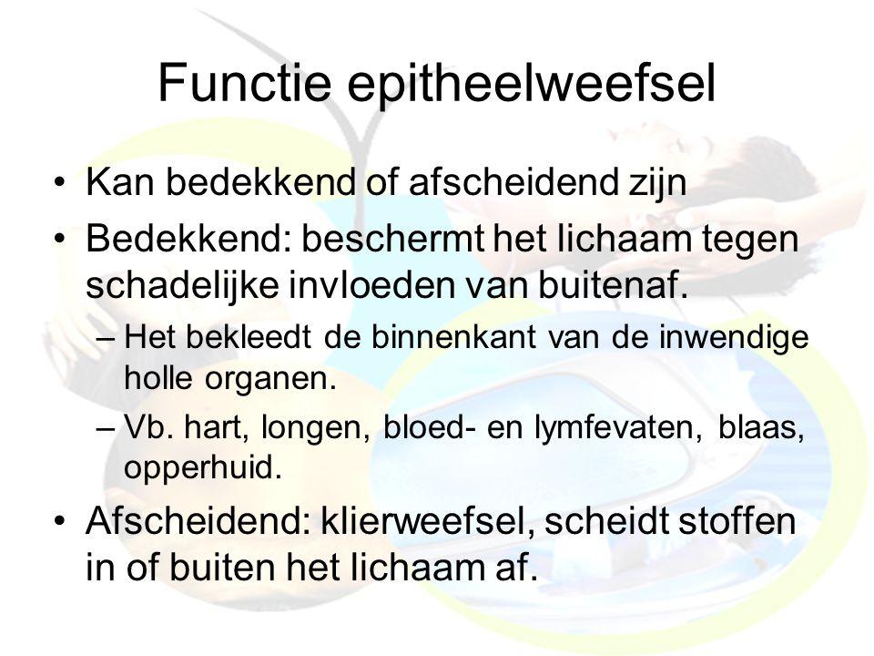 Functie epitheelweefsel Kan bedekkend of afscheidend zijn Bedekkend: beschermt het lichaam tegen schadelijke invloeden van buitenaf. –Het bekleedt de