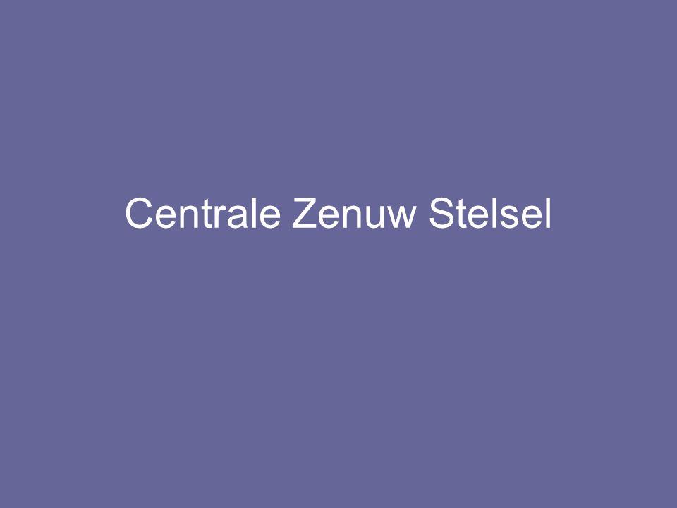Centrale Zenuw Stelsel